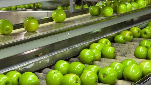 steinerfrucht